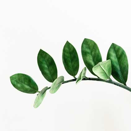 Branche avec feuille